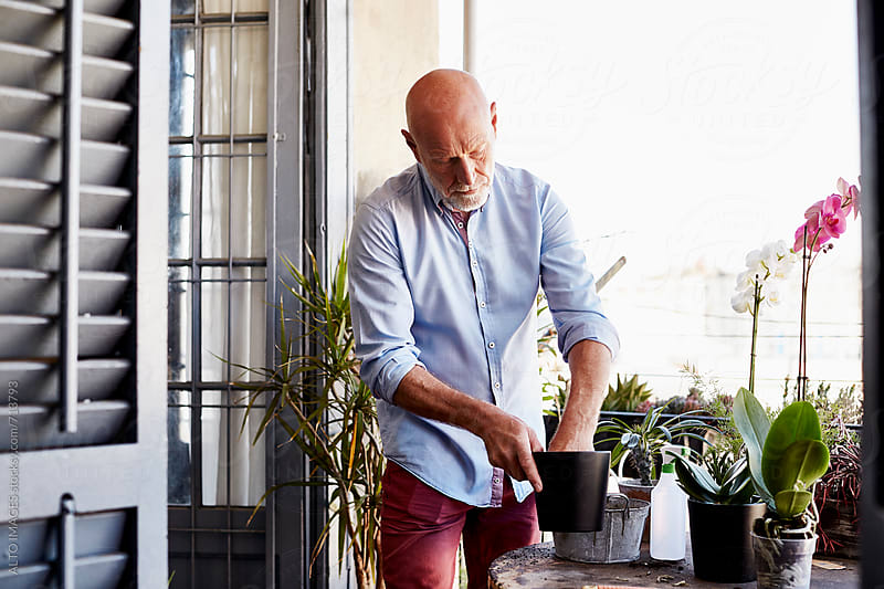 Senior Man Gardening On Balcony by ALTO IMAGES for Stocksy United