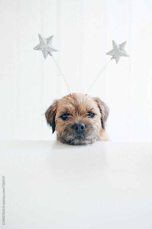 Dog wearing star deely boppers by CHRISTINA K for Stocksy United
