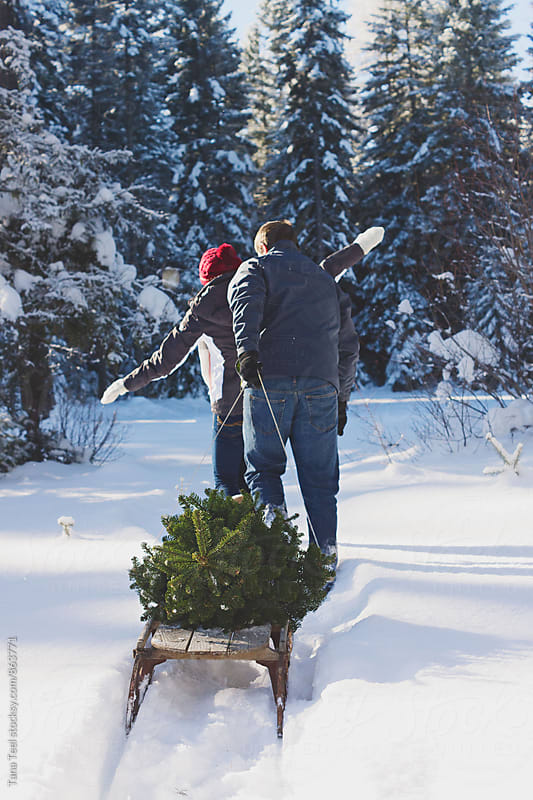 couple walk through snow pulling sled with Christmas tree by Tana Teel for Stocksy United