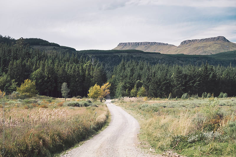 Scenic country dirt road leading to a forest and mountains by Micky Wiswedel for Stocksy United