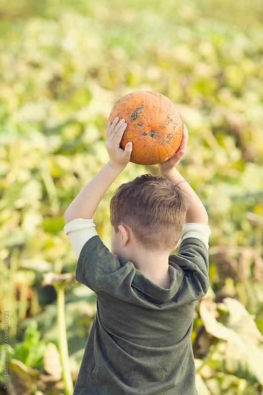 Pumpkins: Boy Holds Pumpkin Choice In Air by Sean Locke for Stocksy United