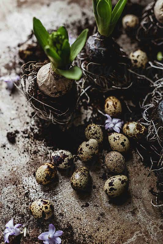 Hyacinth quail eggs by Tatjana Ristanic for Stocksy United