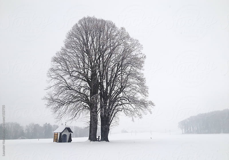 lonesome tree in winterlandscape by Leander Nardin for Stocksy United