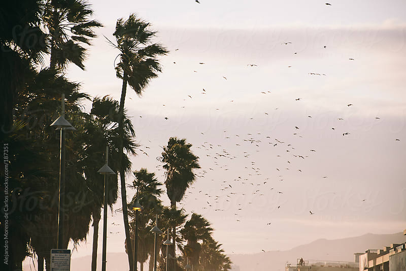 Seagulls and birds flying over beach with palm trees at sunset by Alejandro Moreno de Carlos for Stocksy United