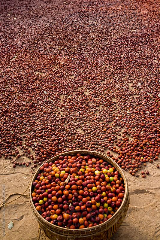 Myanmar (Burma) by Mark Pollard for Stocksy United