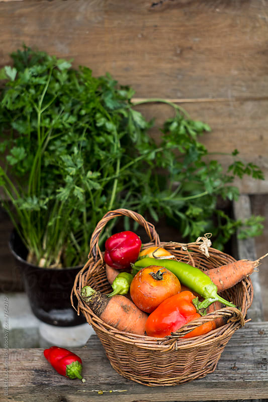 Fall vegetables in a basket by Babett Lupaneszku for Stocksy United