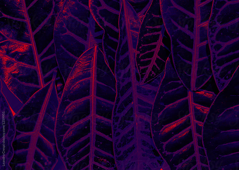 Ultraviolet forest - Leaves under purple light by Leandro Crespi for Stocksy United