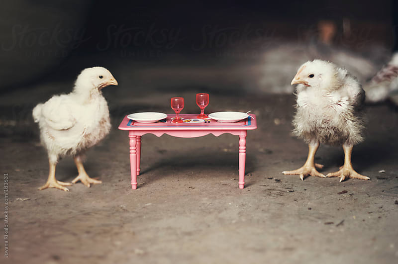 Two chicken waiting for dinner by Jovana Rikalo for Stocksy United
