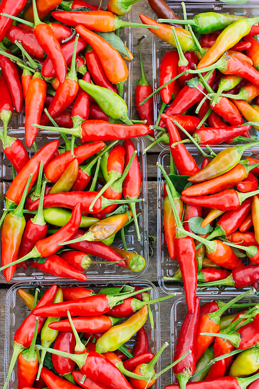 Hot chile peppers by Kristin Duvall for Stocksy United