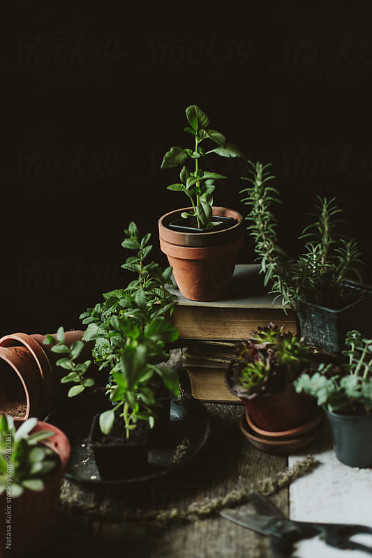 Plants still life by Natasa Kukic for Stocksy United