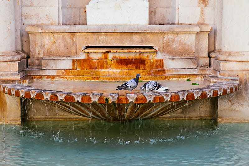 Pigeons bathing in fountain by Preappy for Stocksy United