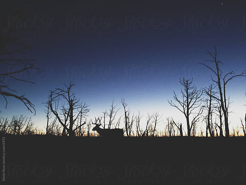 Walking Sunset Deer by Kevin Russ for Stocksy United