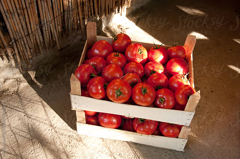 stack of tomatoes outdoors by Sonja Lekovic for Stocksy United