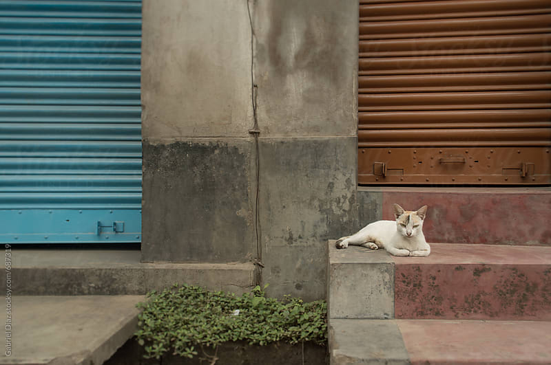 Cat on the stairs in town by Gabriel Diaz for Stocksy United