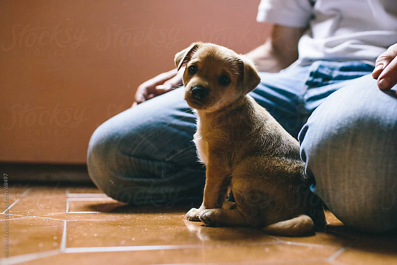 Puppy dog looking at the camera by michela ravasio for Stocksy United