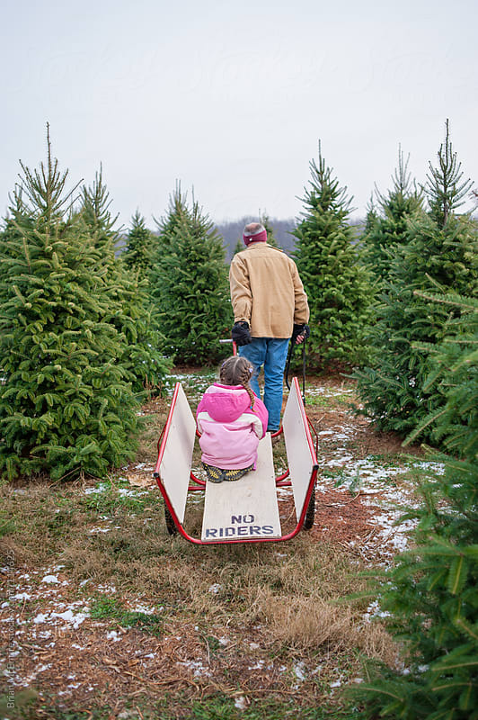 Grandfather Pulls Little Girl on Hand Cart During Christmas Tree Hunt by Brian McEntire for Stocksy United
