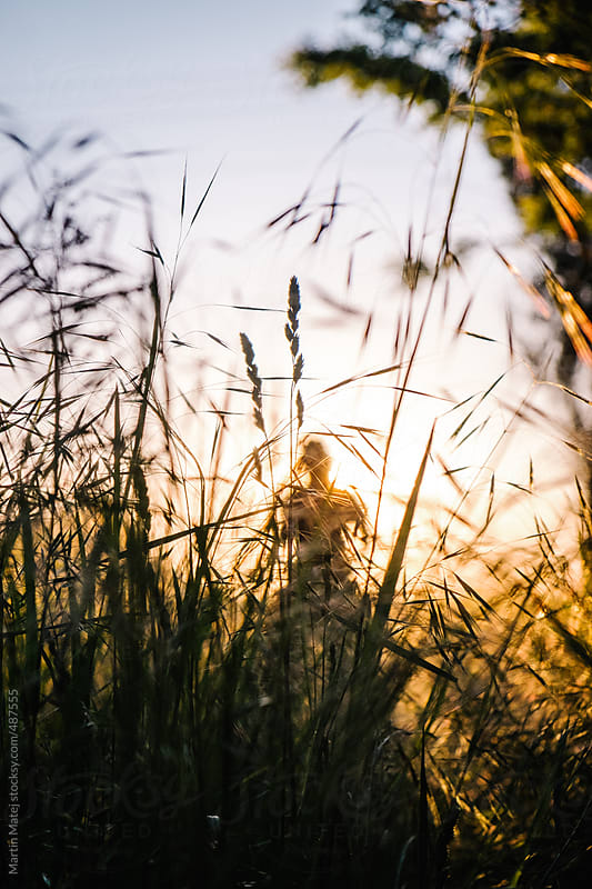 Silhouette of girl behind tall grass during sunset by Martin Matej for Stocksy United