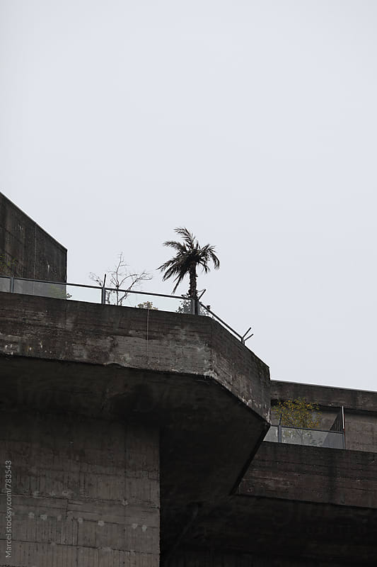 Palmtree on WW2 bunker by Marcel for Stocksy United