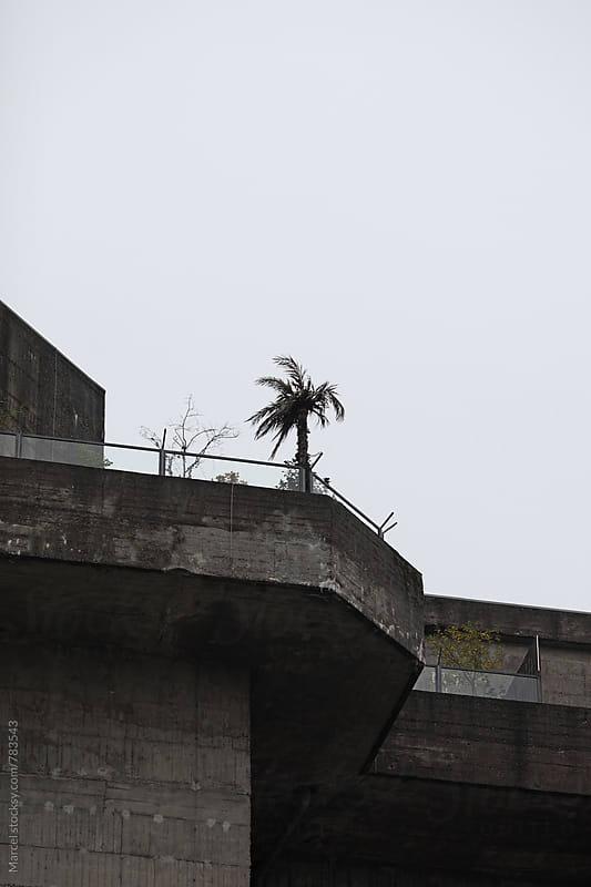 Palmtree on WW2 bunker by Marcel for Stocksy United