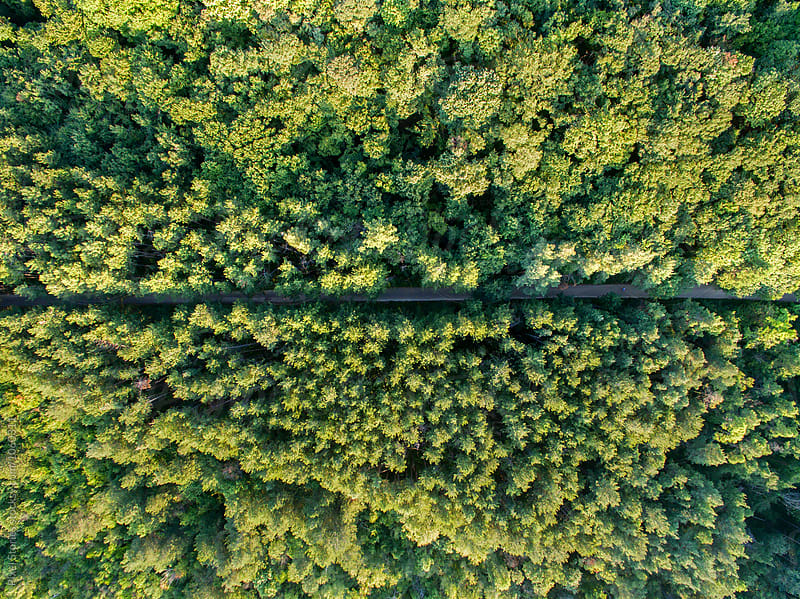 Road through forest by Pixel Stories for Stocksy United