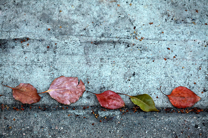 Row of leaves on concrete ground by Dina Giangregorio for Stocksy United