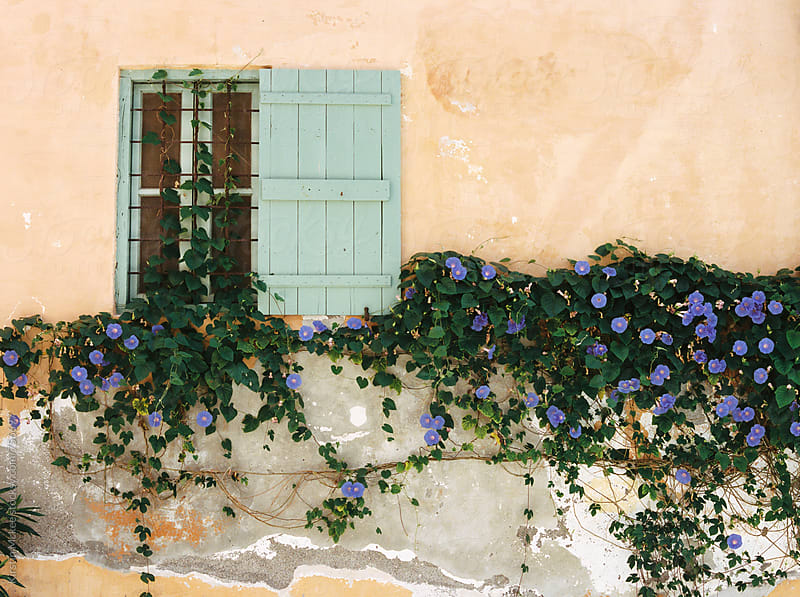 Window and pretty blue flowers, Greece by Kirstin Mckee for Stocksy United