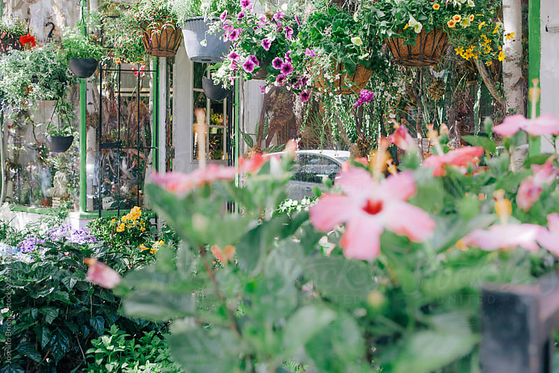 Garden Flowers and Plants Flea Market by Joselito Briones for Stocksy United