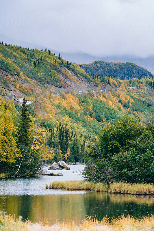 fall colors on a rainy day in Alaska by Tara Romasanta for Stocksy United
