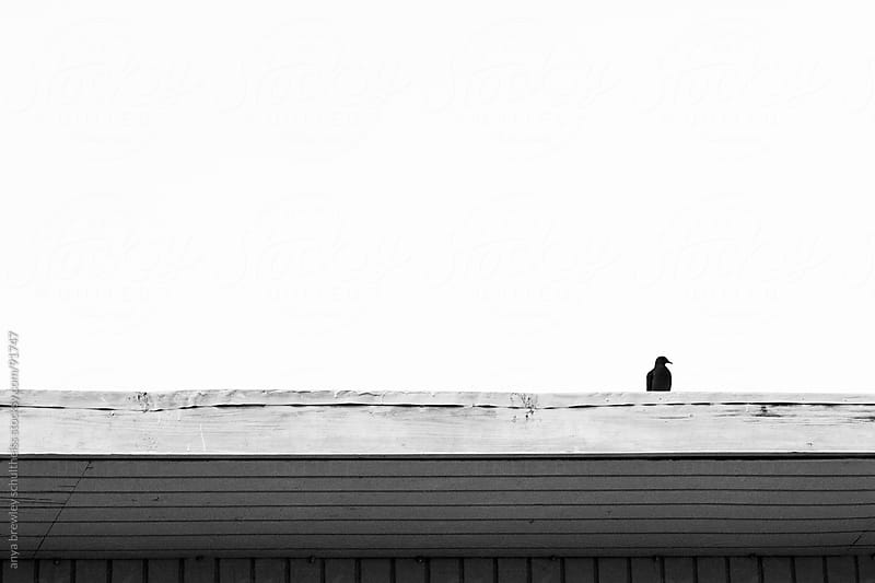 Single bird sitting on a roof in black and white. Minimal image by anya brewley schultheiss for Stocksy United