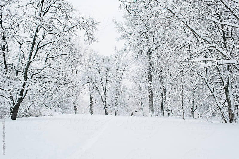 Fresh fallen snow after a storm by Preappy for Stocksy United