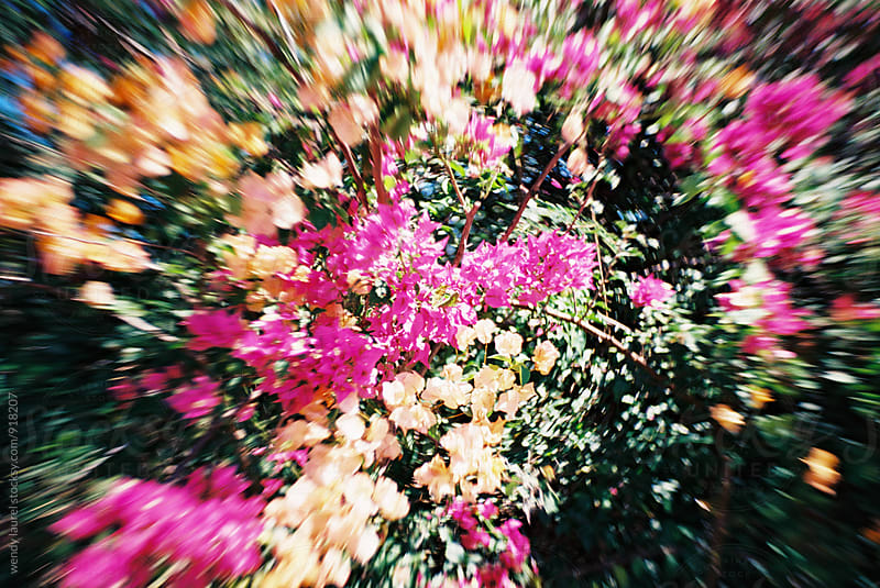 pink bougainvilla flowers with swirly bokeh by wendy laurel for Stocksy United