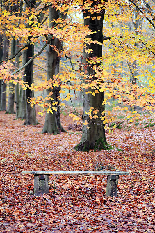 Simple wooden bench in a forest in autumn by Marcel for Stocksy United