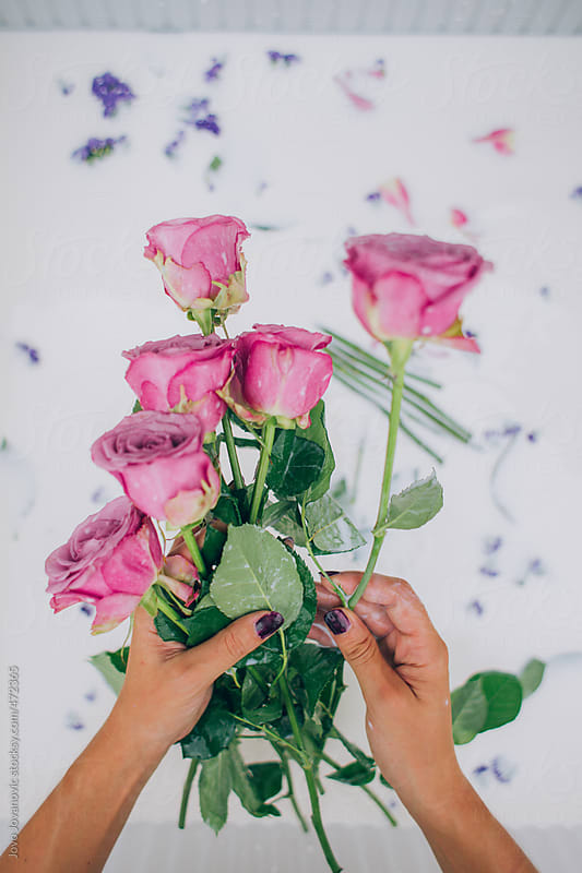 Woman's arranging pink roses by Jovo Jovanovic for Stocksy United