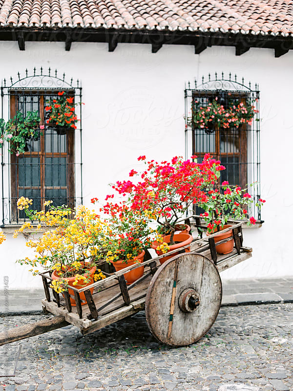 Old wooden cart selling bougainvillea by Daniel Kim Photography for Stocksy United