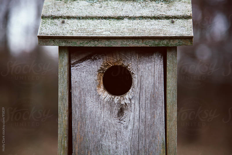 A circular entrance to a homemade birdhouse. by Holly Clark for Stocksy United