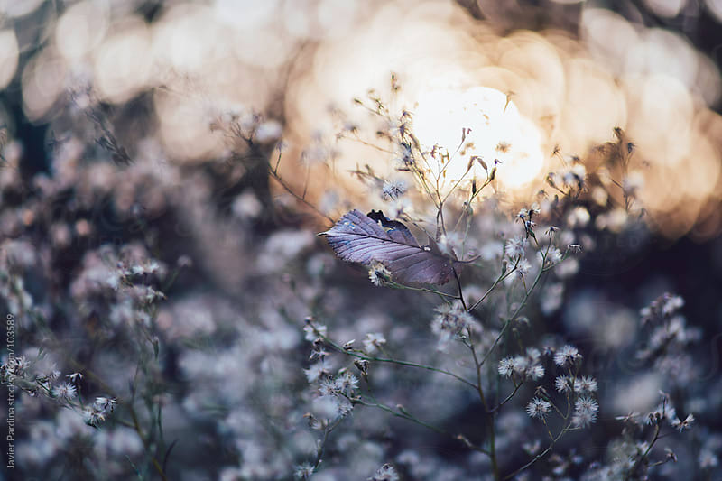 detail of small plants at sunset by Javier Pardina for Stocksy United