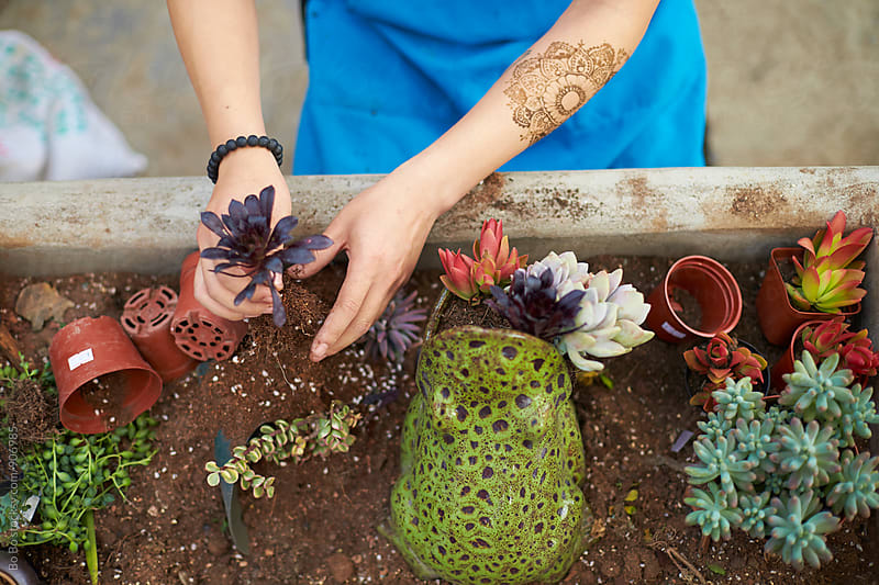 planting Succulents in the pot by Bo Bo for Stocksy United