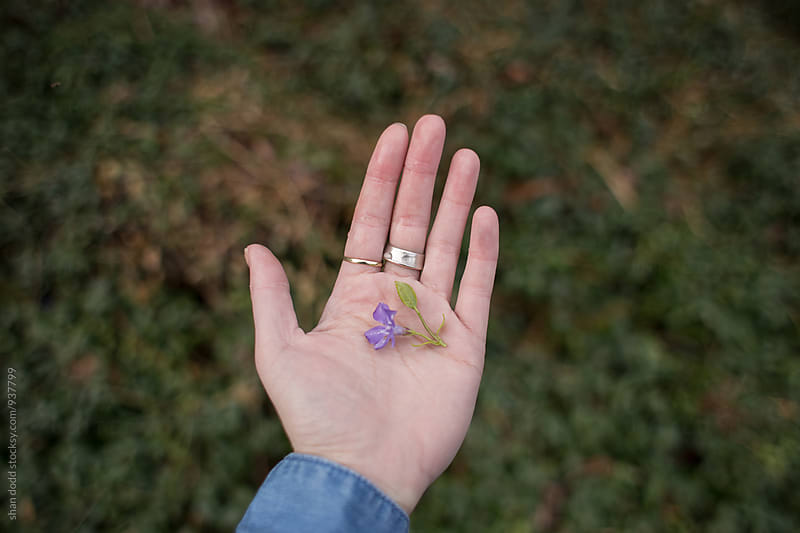 Purple flower in hand by Shan Dodd for Stocksy United