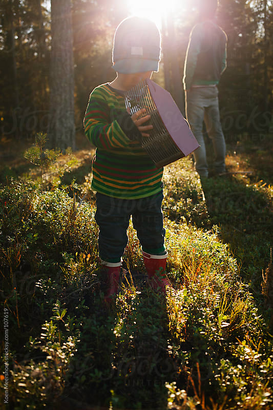 Little boy holding a machine to gather berries while his dad is standing in the sun. by Koen Meershoek for Stocksy United
