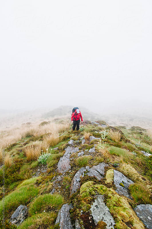 Woman trekker climbing a hill in wet conditions, Kahurangi National Park, New Zealand. by Thomas Pickard for Stocksy United