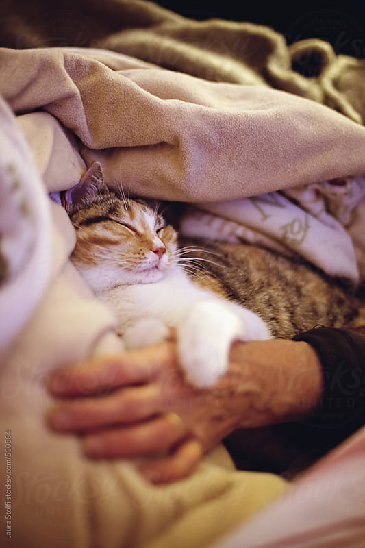 Tabby cat sleeping embracing woman hand in front of tv by Laura Stolfi for Stocksy United
