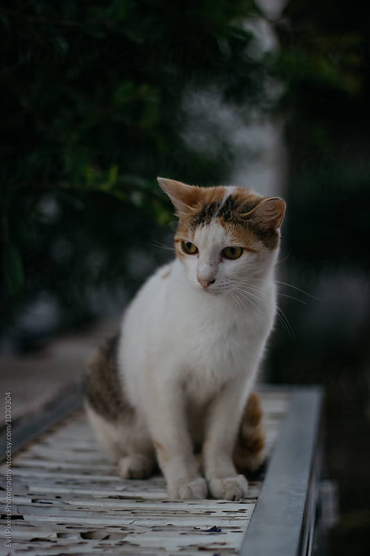 Beautiful stray cat on the street by Evil Pixels Photography for Stocksy United
