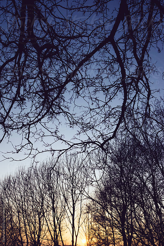 Autumn trees and sunset by Robert Kohlhuber for Stocksy United