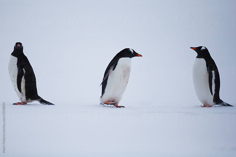 Antarctica - South Shetland Islands by Mark Pollard for Stocksy United