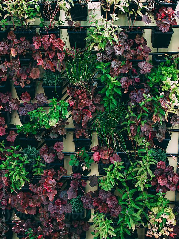 Vertical  garden by Photographer Christian B for Stocksy United