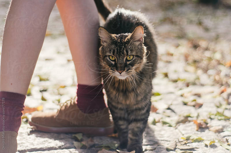 friendly tabby cat rubbing into child's legs by Deirdre Malfatto for Stocksy United