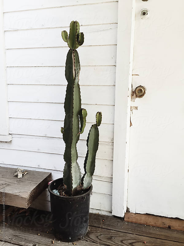 tall cactus plant sitting outside white building by Nicole Mason for Stocksy United