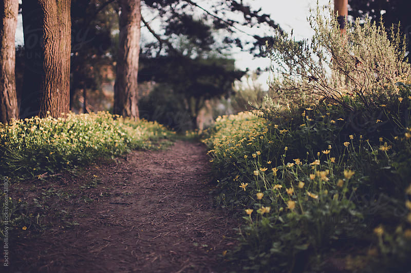A wooded path with yellow flowers by Rachel Bellinsky for Stocksy United