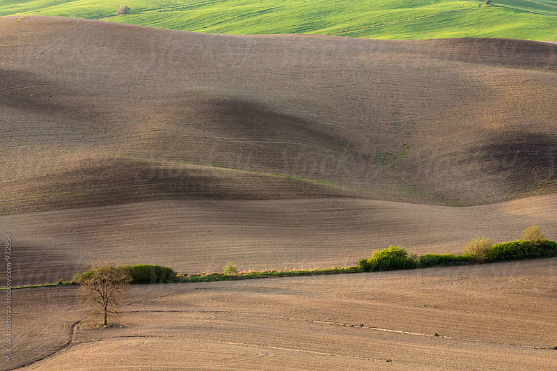 Solitude. Tuscany fields by Marilar Irastorza for Stocksy United