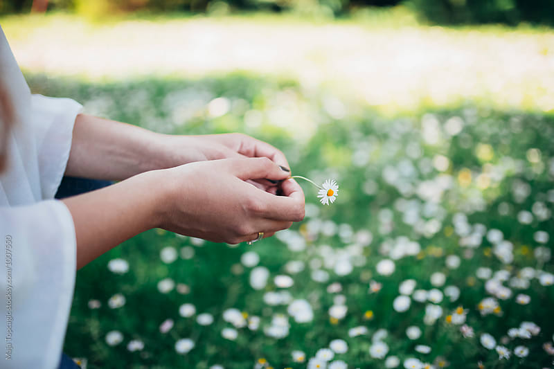 Female hand holding daisies by Maja Topcagic for Stocksy United